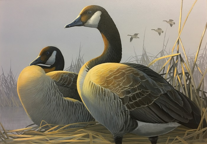First place in the 2018 Wisconsin Waterfowl Stamp design contest goes to Caleb Metrich of Lake Tomahawk for his painting of a pair of Canada Geese in a marsh setting.