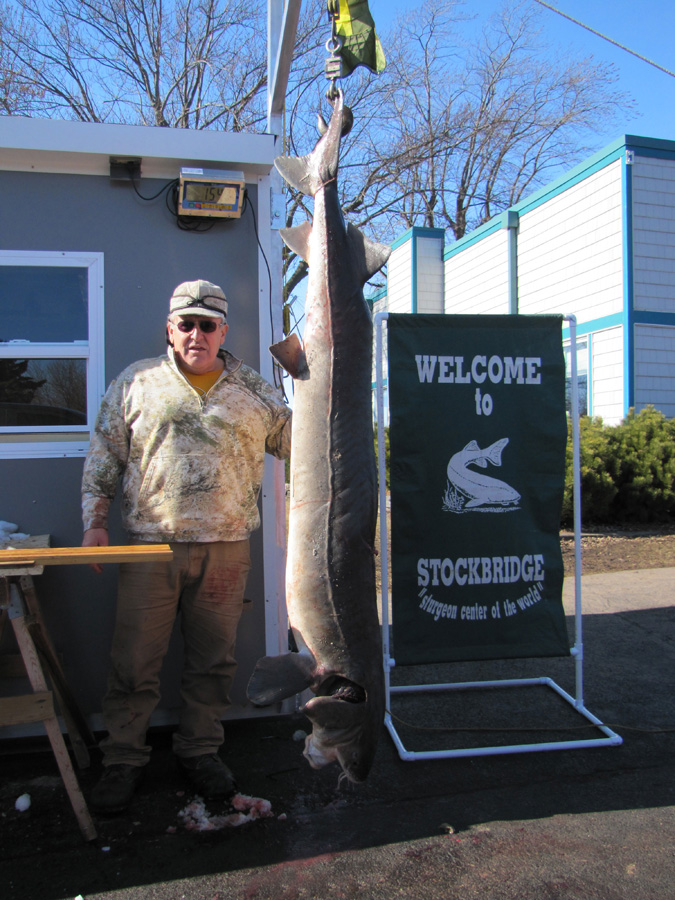 Gerald Peterson's 83.4-inch, 154.9 pound sturgeon.